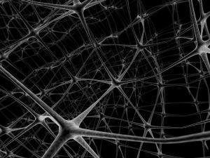 Pathways in the brain created by neurons